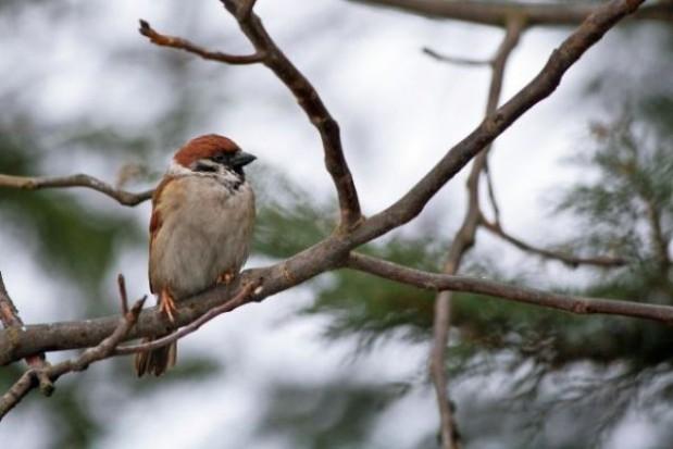 W Krakowie zrobią z odpadów budki lęgowe dla ptaków