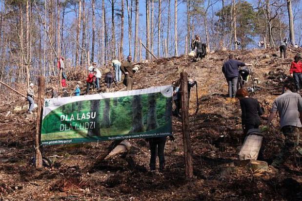 W Gdańsku zostanie posadzonych ok. 15 mln drzewek