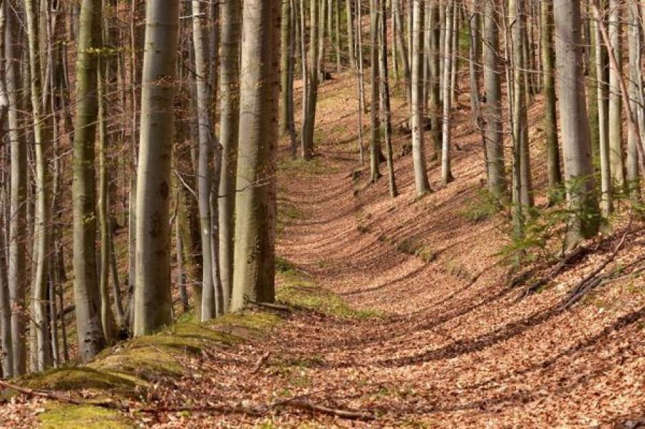 Gminy walczą o rekompensaty finansowe związane z gospodarką leśną