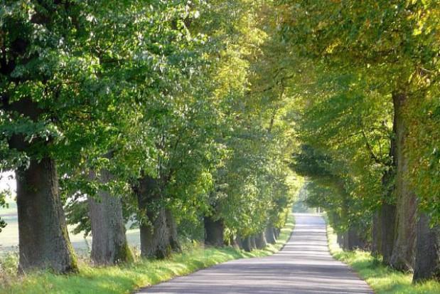 Drzewa przy drogach - wycinać czy chronić?