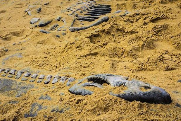 Powstał ośrodek geologiczny w którym można odkopać... dinozaura
