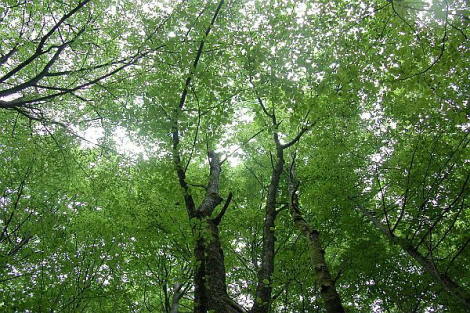 Drogowcy sadzą drzewa wzdłuż dróg