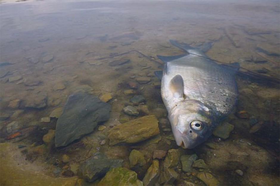 NIK skontrolowała sposoby prowadzenia gospodarki rybackiej