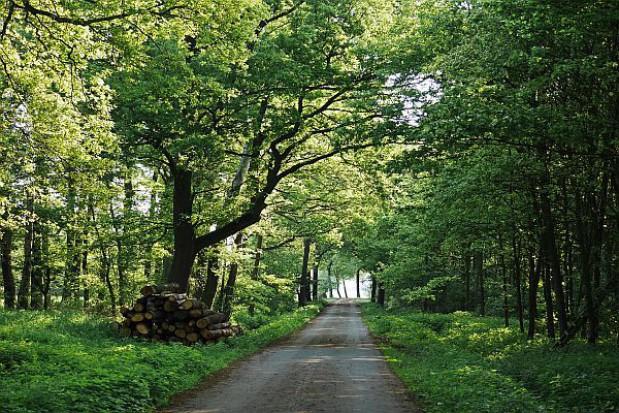 Lasy Państwowe wydadzą ok. 700 mln zł na inwestycje
