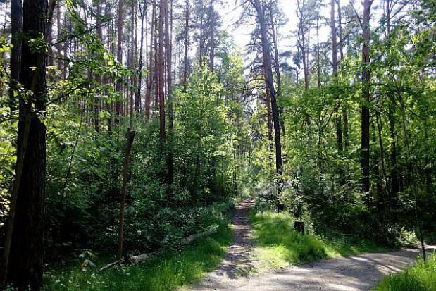 Boom inwestycyjny w Lasach Państwowych