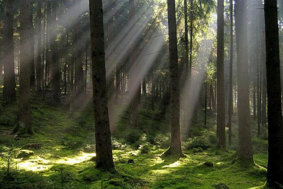 Zakazać prywatyzacji i komercjalizacji Lasów Państwowych