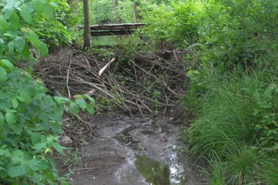 Samorządy dostaną rekompensaty za szkody m.in. bobrów