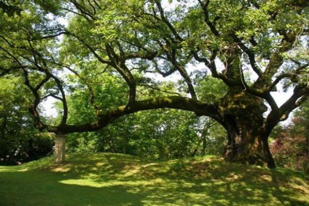 Nawet 150 tys. zł za wycięcie prywatnego drzewa
