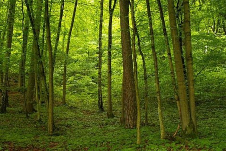 Aplikacja ułatwi zwiedzanie parków krajobrazowych
