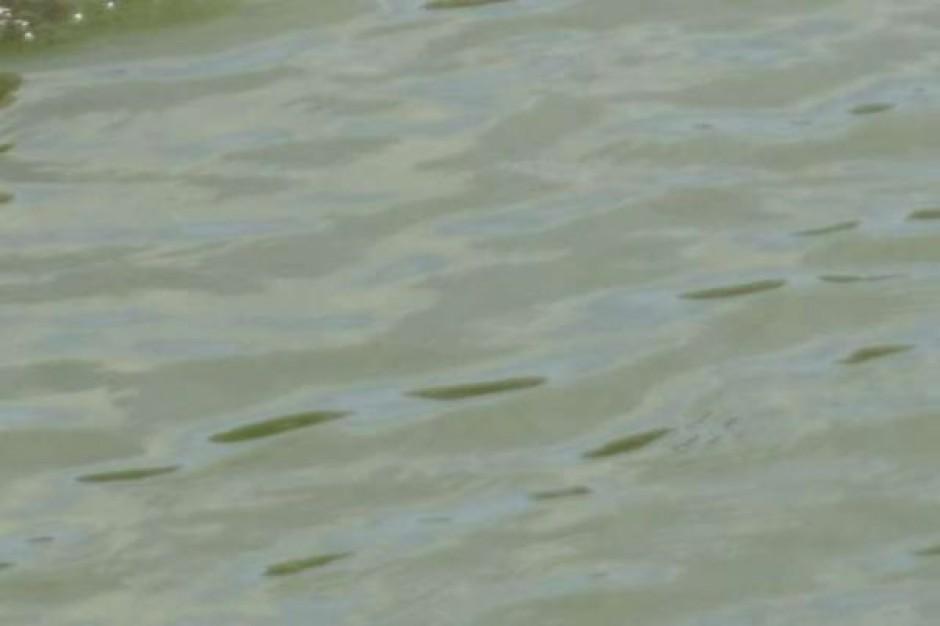 Zarządcy kąpielisk uwaga na sinice