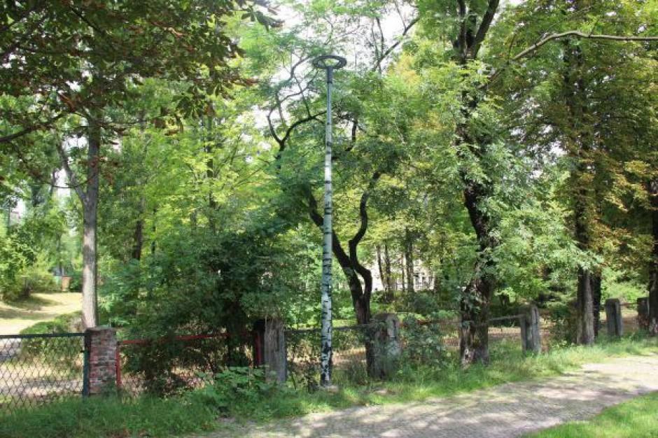 Drogę do chorzowskiego Orlika oświetlają… drzewa