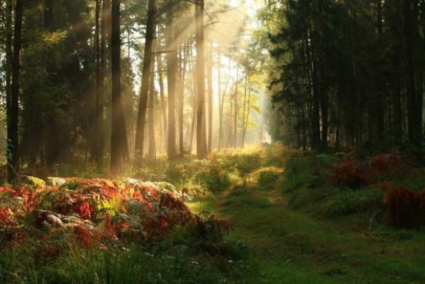 Lasy Państwowe przywracają tereny byłych poligonów dla turystów