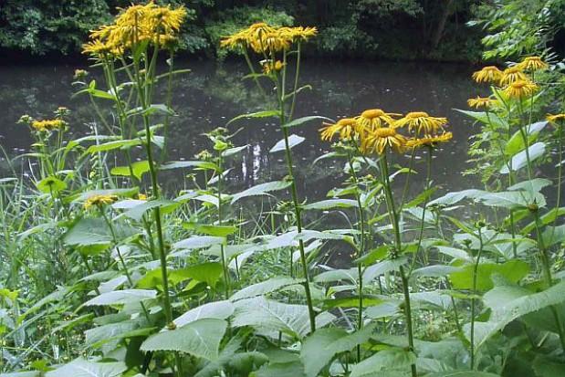 Botaniczne odkrycie w gminie Piecki