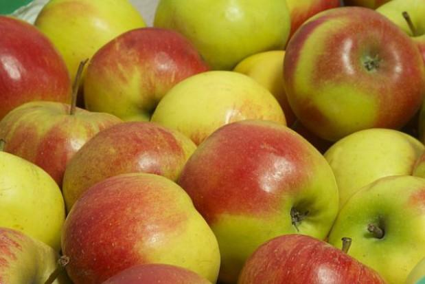 Przedszkolaki też będą jeść jabłka. ZNP apeluje do ministra