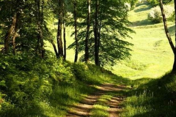 NIK: przyroda nie dość chroniona przez brak planów zagospodarowania