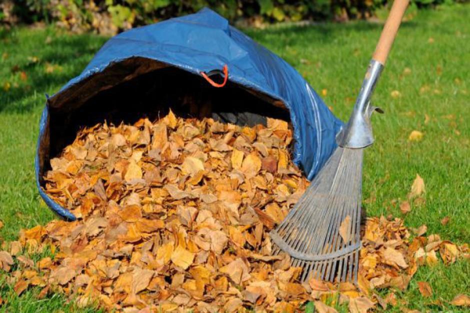 Kasę z zimowego utrzymania dróg Kraków przeznacza na usuwanie liści