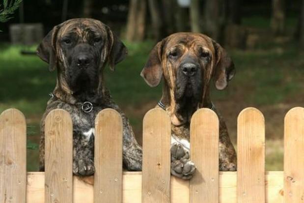 Chcą kontrolować kosze na odpady, a dowiedzą się gdzie biega pies