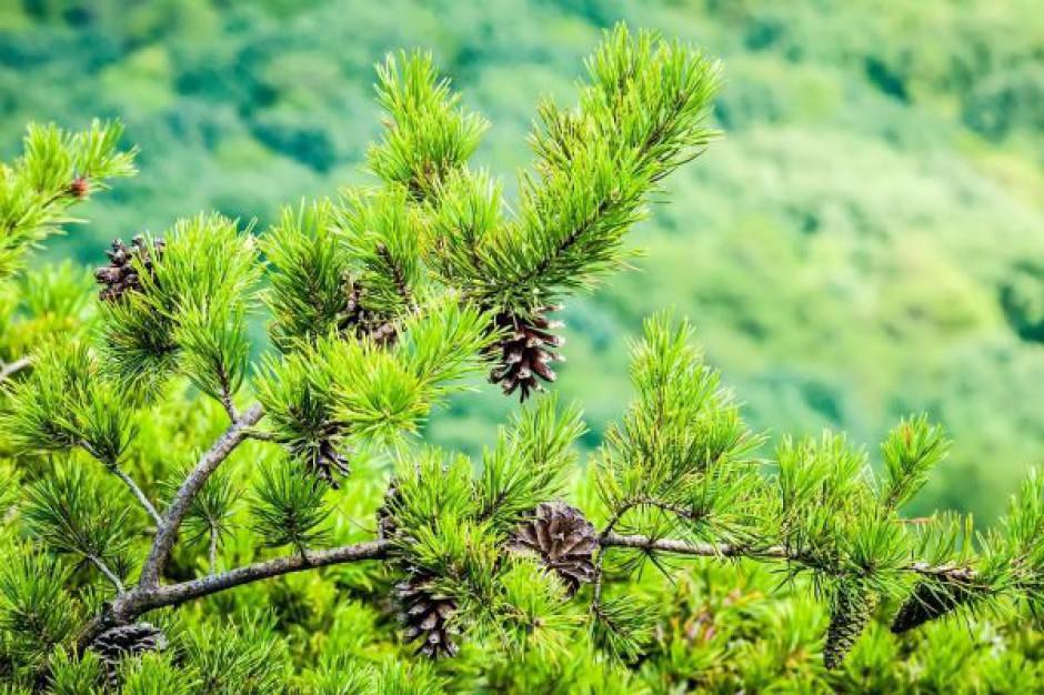 Minister środowiska: będą dodatkowe pieniądze dla zielonych gmin