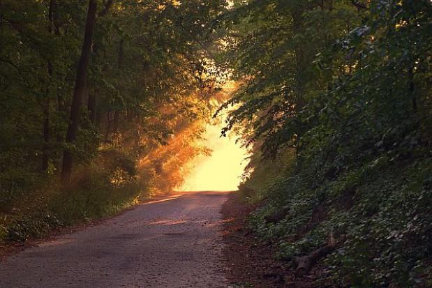 Piotr Otawski: Poprawka PiS dot. lasów uniemożliwi przejęcia gruntów leśnych