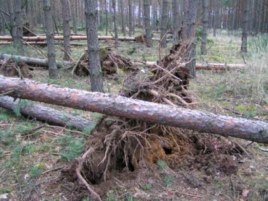 Wichury nad Polską: 238 tysięcy odbiorców bez prądu, 2400 interwencji strażaków