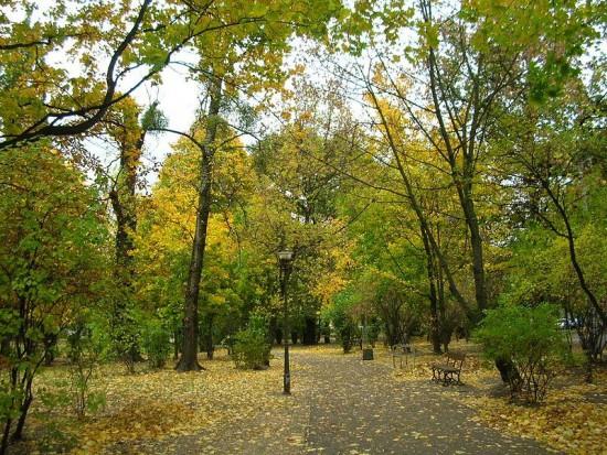 Za miejską zieleń w Bydgoszczy odpowiadają cztery firmy