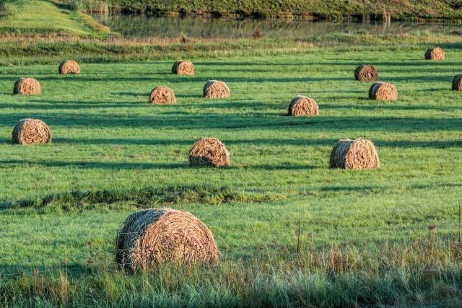 Rząd przyjął projekt regulujący stan prawny gruntów na wsi