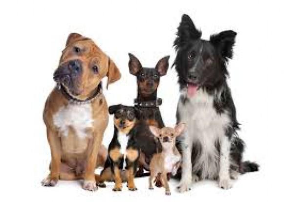 Radom ma kasę na czipowanie blisko pół tysiąca psów