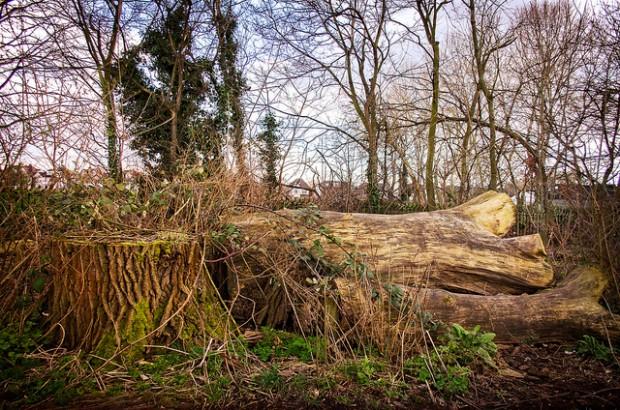 Zmiany w przepisach o ochronie przyrody: Mniejsze kary za wycinkę drzew