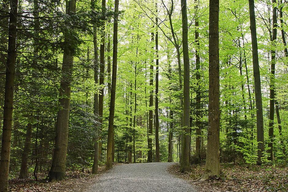 Leśnicy posadzą 21 mln drzew w lasach warmińsko-mazurskich