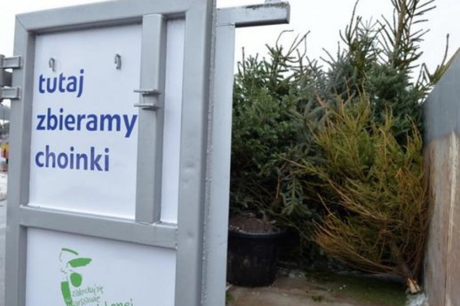 Warszawa, energia z choinek: zebrano 548 ton biomasy