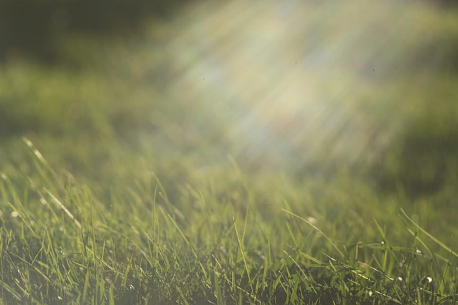 Wojewoda mazowiecki ostrzega przed wypalaniem traw