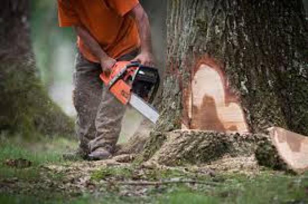 Rondo w Świdnicy – większe koszty, więcej drzew pod topór