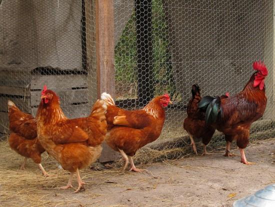 Przy szkołach poowinny powstać minigospodarstwa ze zwierzętami