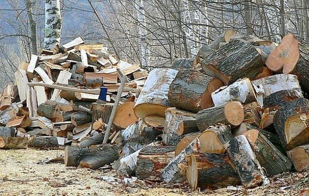 Prokuratura bada, czy w Radomiu doszło do nadużyć przy wycince drzew