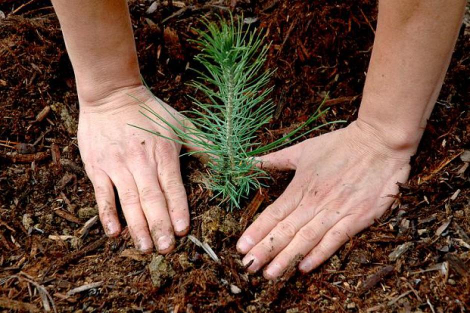 Akcja ekologów i samorządów: każdy może zasadzić własne drzewo