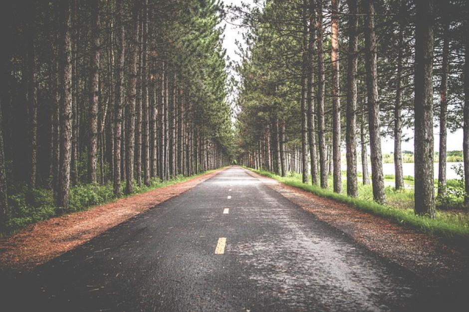 Trybunał Konstytucyjny zajmie się przepisami dot. usuwania przydrożnych drzew