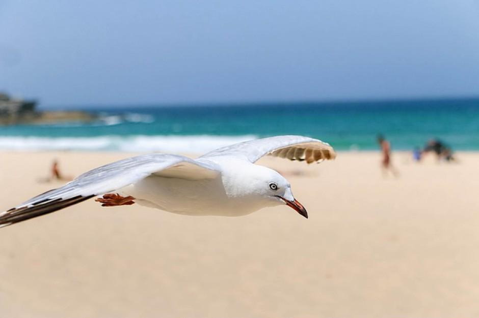 Plaża w Międzywodziu będzie większa