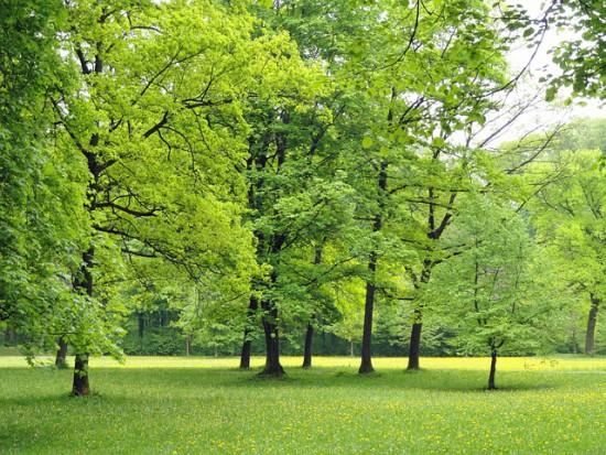 W Warszawie urośnie milion nowych drzew