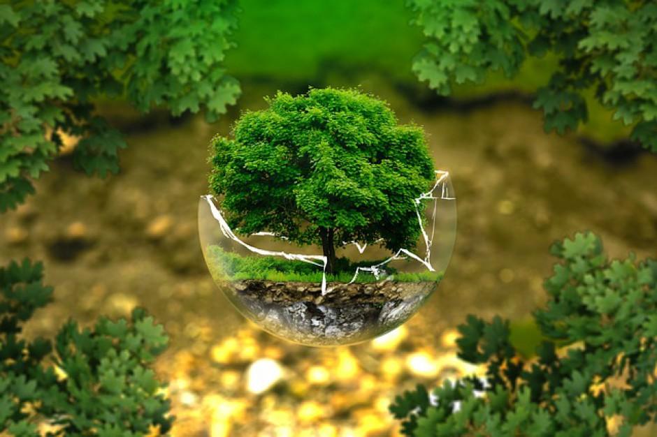 Ponad 6 mld zł na ochronę środowiska i gospodarkę wodną w 2015 r.