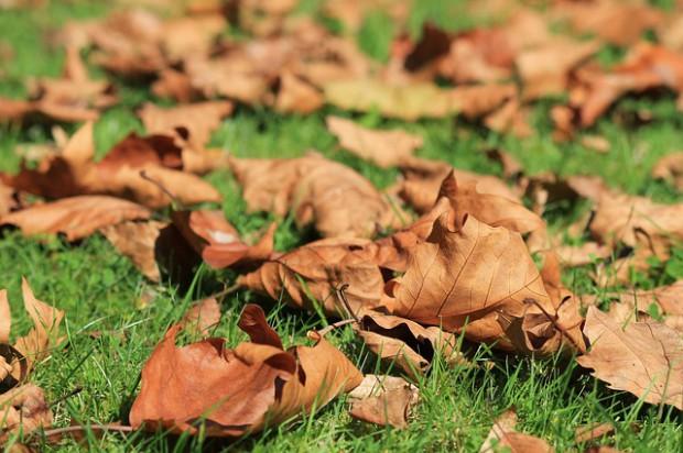 Warszawa będzie odbierać odpady zielone dwa razy częściej