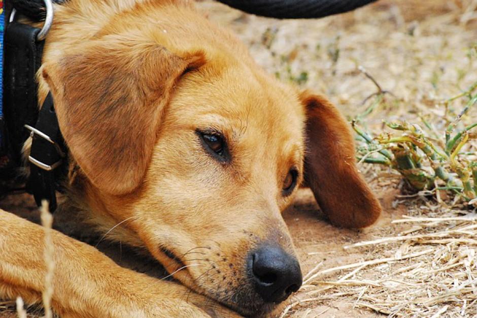 Media społecznościowie bardziej pomagają zwierzętom niż miejskie dofinansowanie