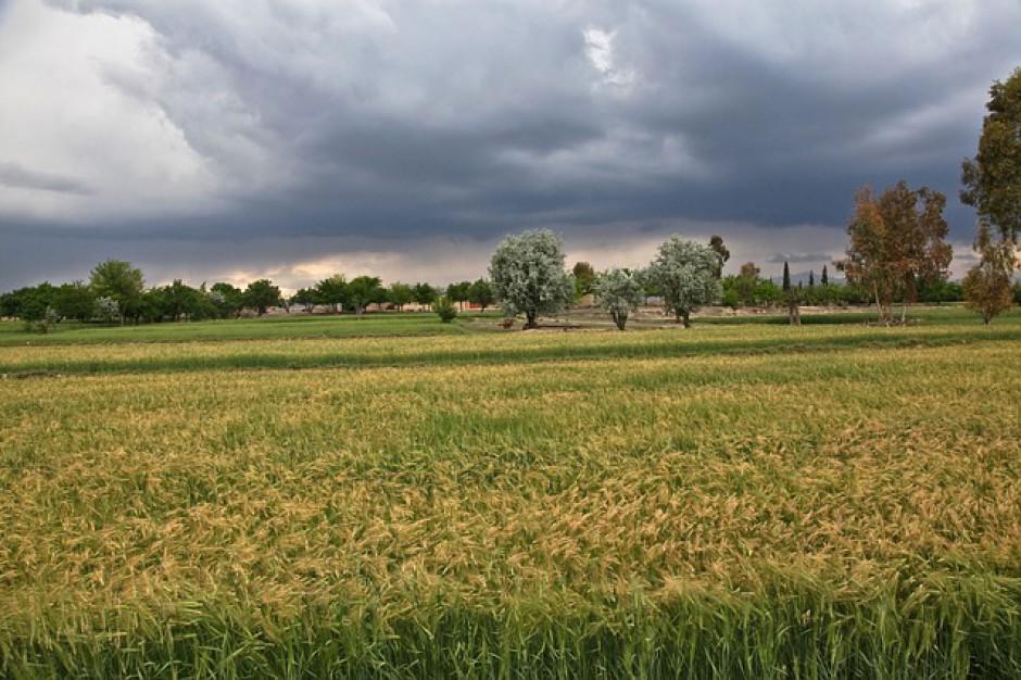 Prognoza pogody na 10 i 11 lipca. Uwaga na porywy wiatru