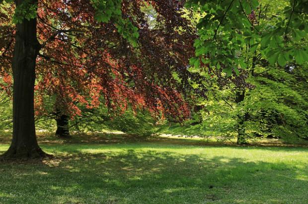 Zmiana prawa w zakresie ochrony terenów zieleni