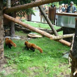 fot. Śląski Ogród Zoologiczny