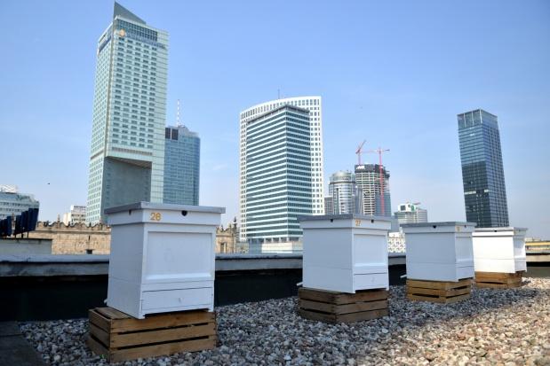 Warszawa:  miejskie pszczoły na dachu Pałacu Kultury i Nauki