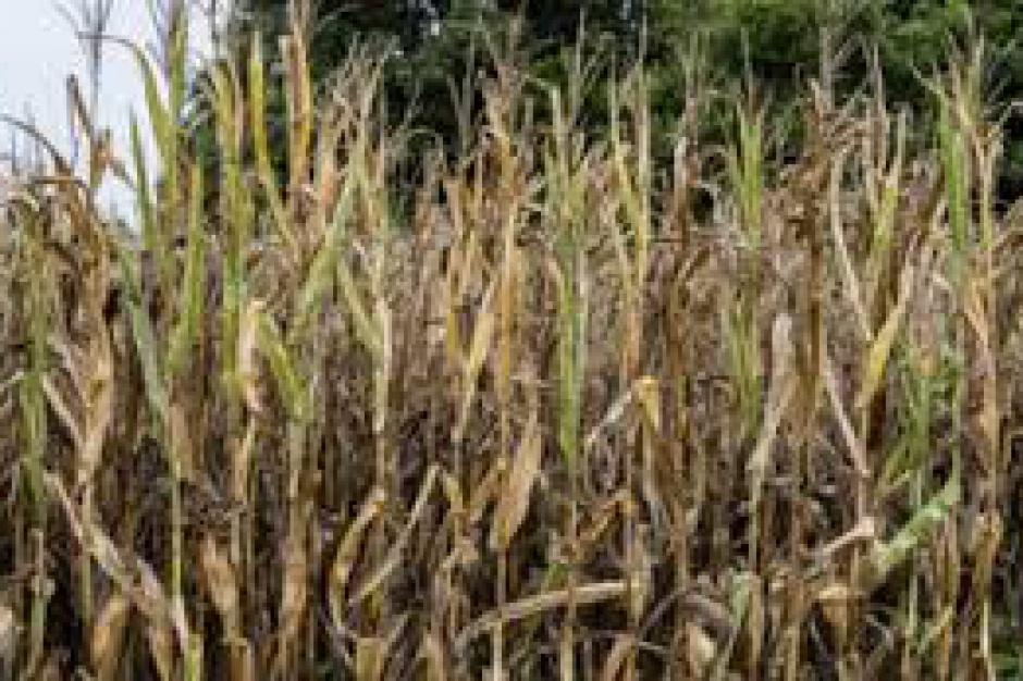 Na jaką pomoc mogą liczyć regiony dotknięte suszą?