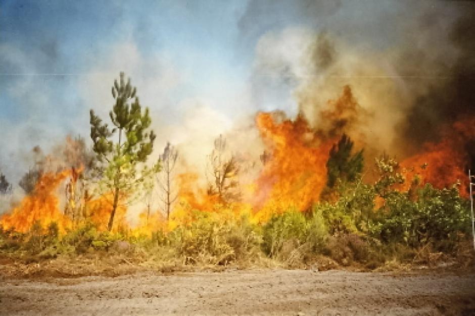 Susza, pożary: strażacy apelują o zachowanie zasad bezpieczeństwa