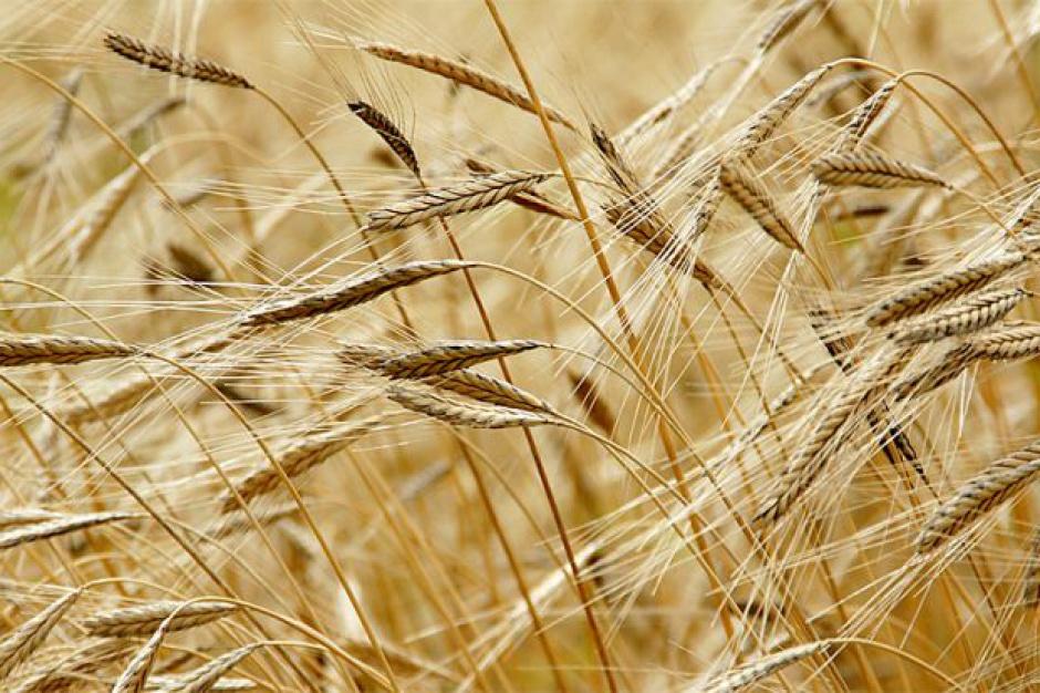 Zachodniopomorskie: część regionu uznać za dotkniętą suszą