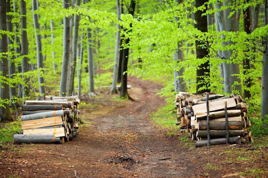 NIK, Lasy Państwowe: zarobki rosną, przychody spadają