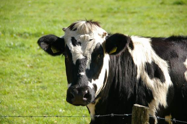Na Podlasiu spadają pensje, to efekt kłopotów branży mleczarskiej
